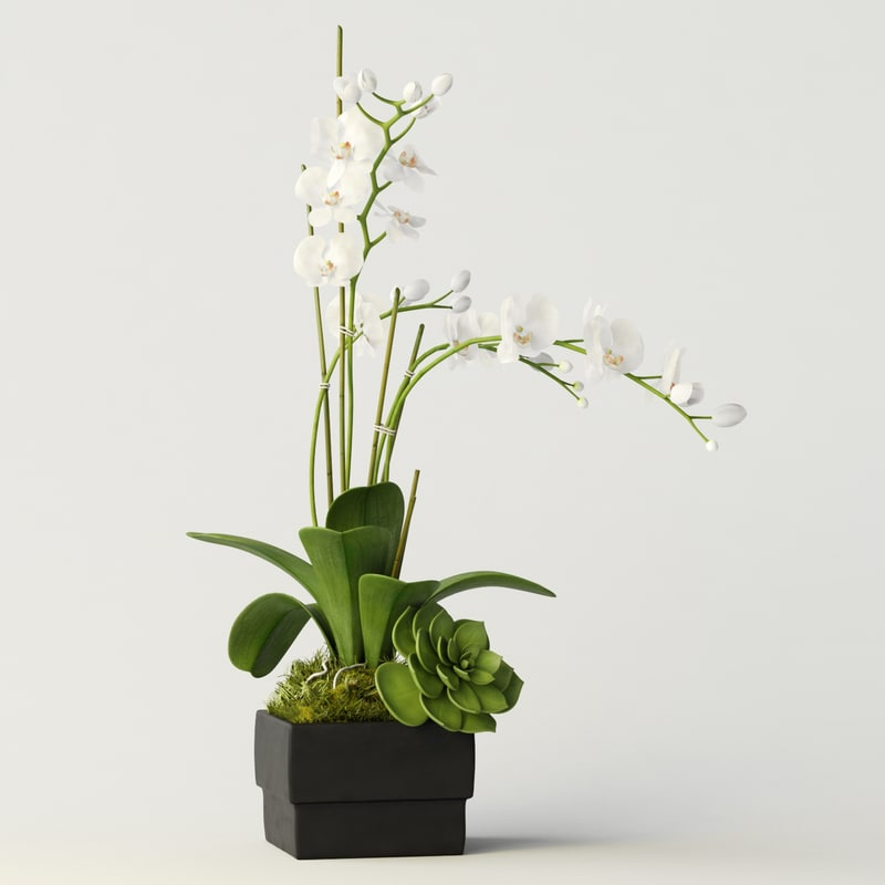 3d model of orchid