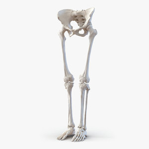 female lower body skeleton obj