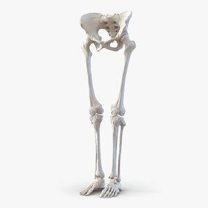female lower body skeleton obj