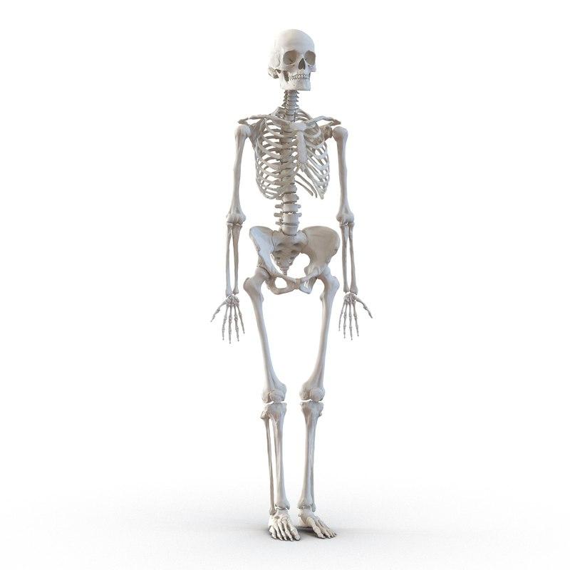 human female skeleton max