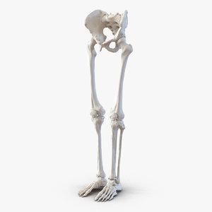 3ds human male lower body skeleton