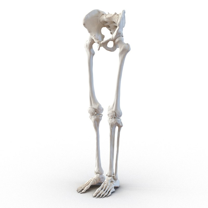 3ds human male lower body skeleton