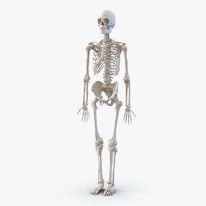human male skeleton 3d c4d