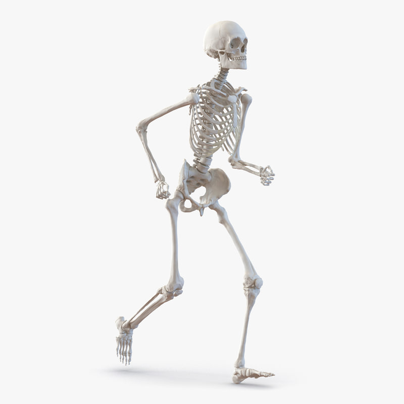 human male skeleton pose 3d 3ds