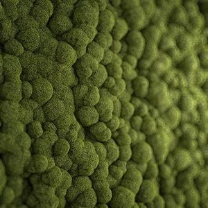 3d model photorealistic moss