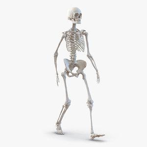 human female skeleton pose c4d
