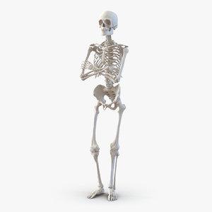human male skeleton pose 3d model