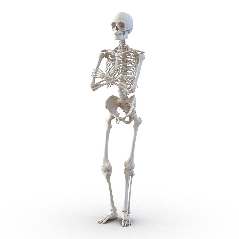 human male skeleton pose 3d model