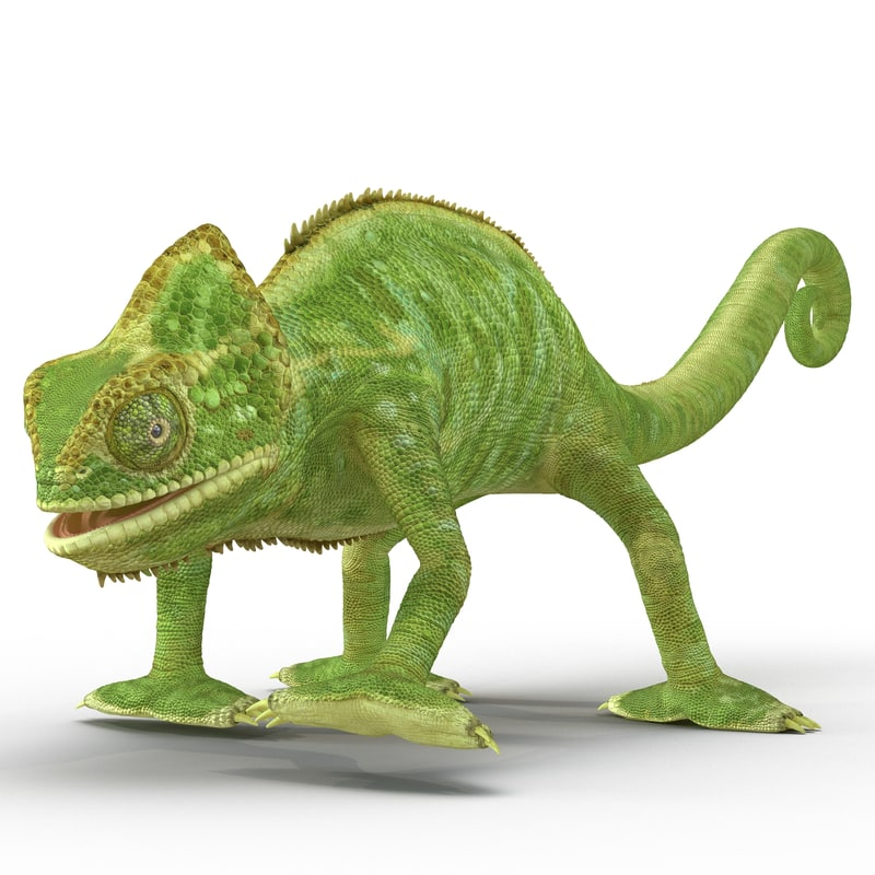 3d chameleon rigged
