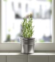 rosemary herb 3d obj