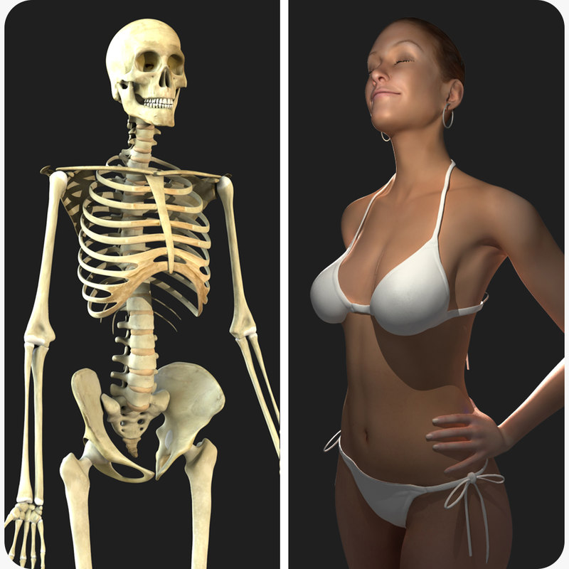 rigged skeleton female combo 3d model