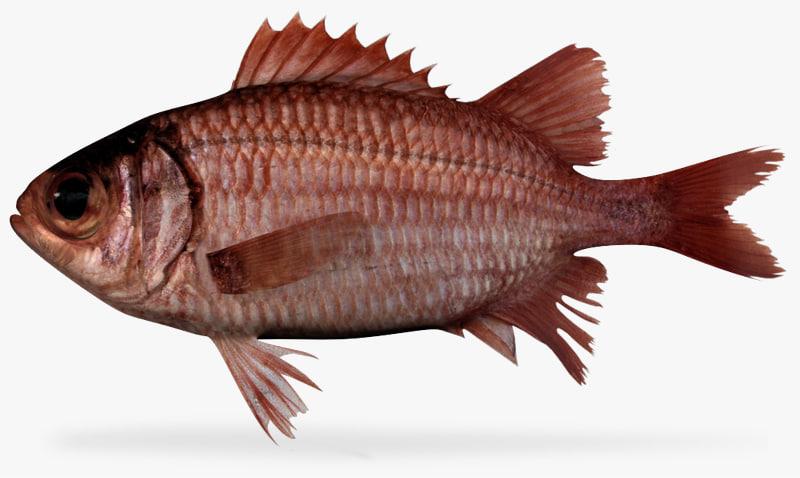 panamic soliderfish 3d fbx