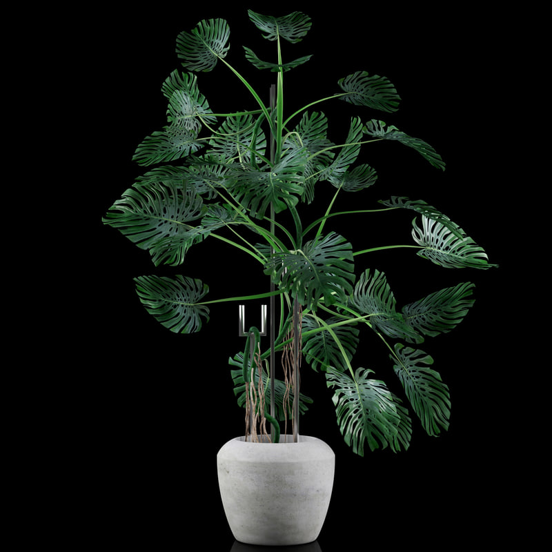 3d model liana monstera