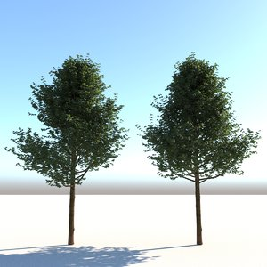 architectural trees 3d model