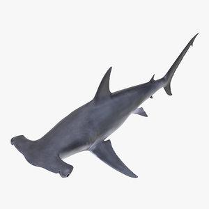 3d great hammerhead shark model