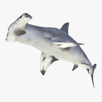 3d great hammerhead shark pose