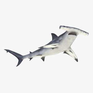 3d max great hammerhead shark rigged