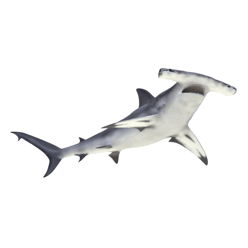 3d max great hammerhead shark rigged