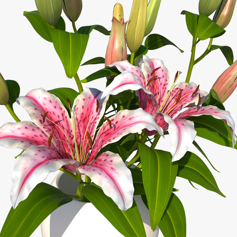 lily pink bouquet 3ds