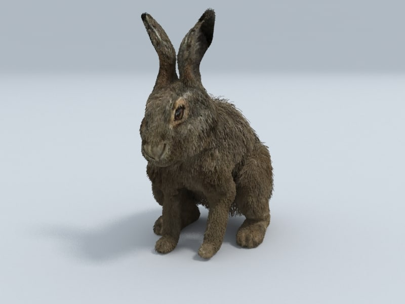 3d model realistic hare