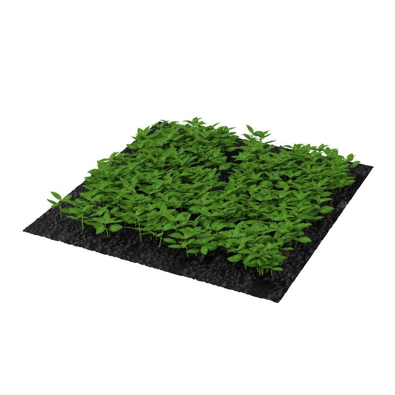basil plants garden 3d model