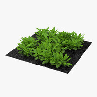 3ds sorrel plants garden