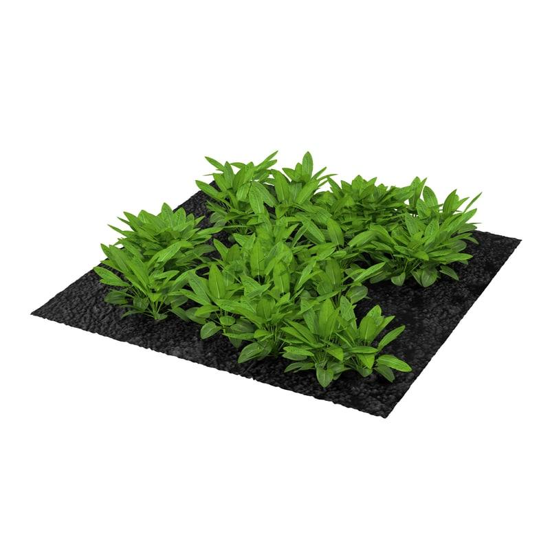3ds sorrel plants garden