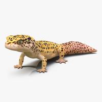 leopard gecko pose 2 3d c4d