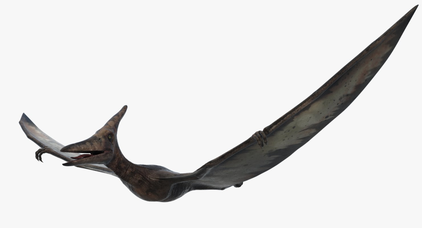 realistic pteranodon rigged 3d model