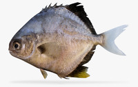 3d blackblotch pompano
