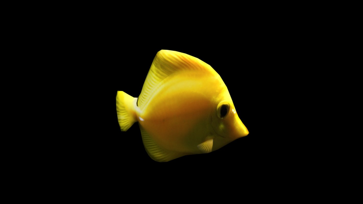 yellow fish 3d obj
