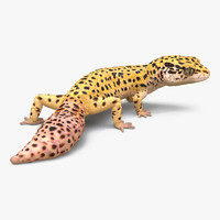 3d leopard gecko pose 4 model