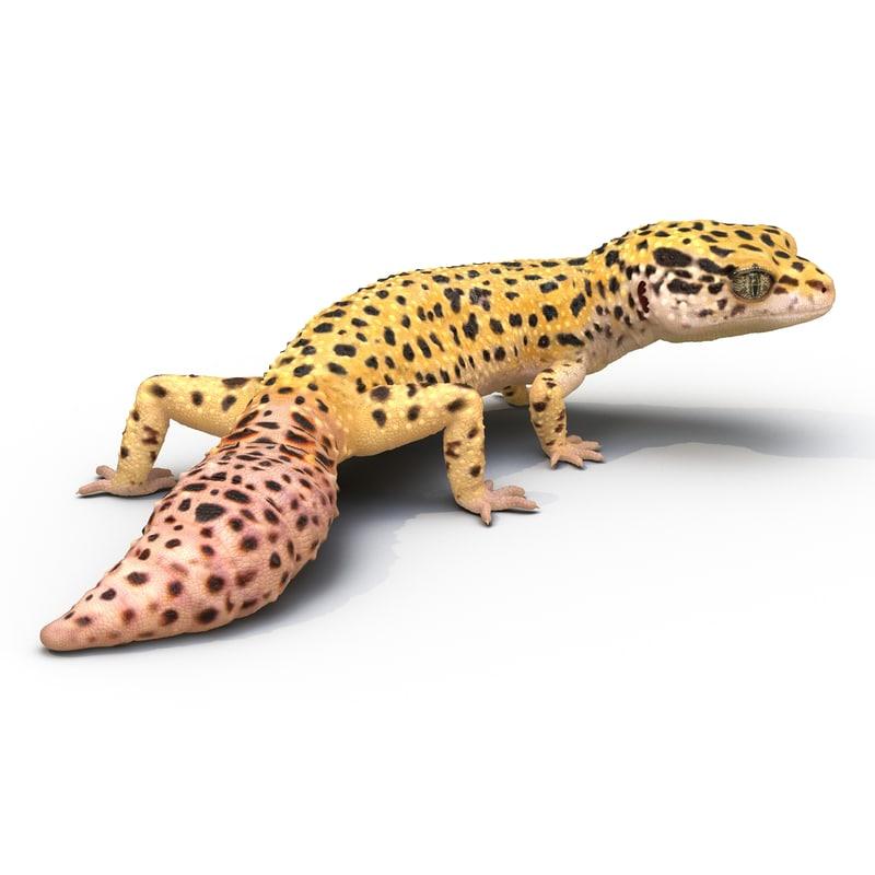 3d leopard gecko pose 4 model