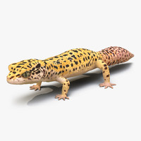 leopard gecko 3d model