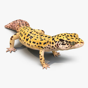 max leopard gecko rigged