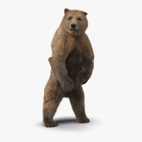 Brown Bear Standing Pose with Fur 3D Model