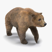 brown bear fur pose 3d model