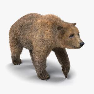 brown bear fur pose 3d model