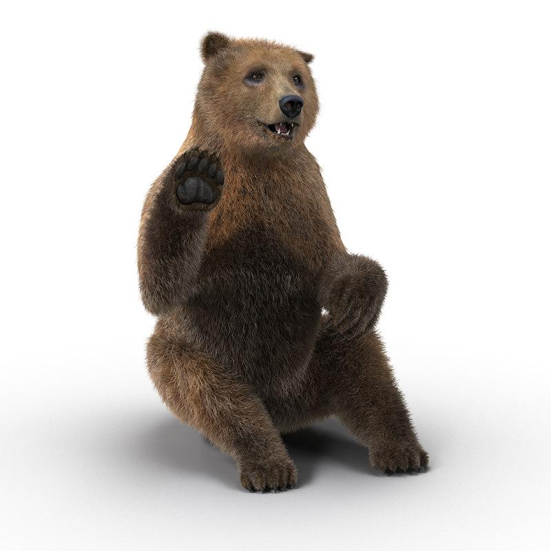 brown bear fur pose max