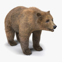 3d model brown bear fur