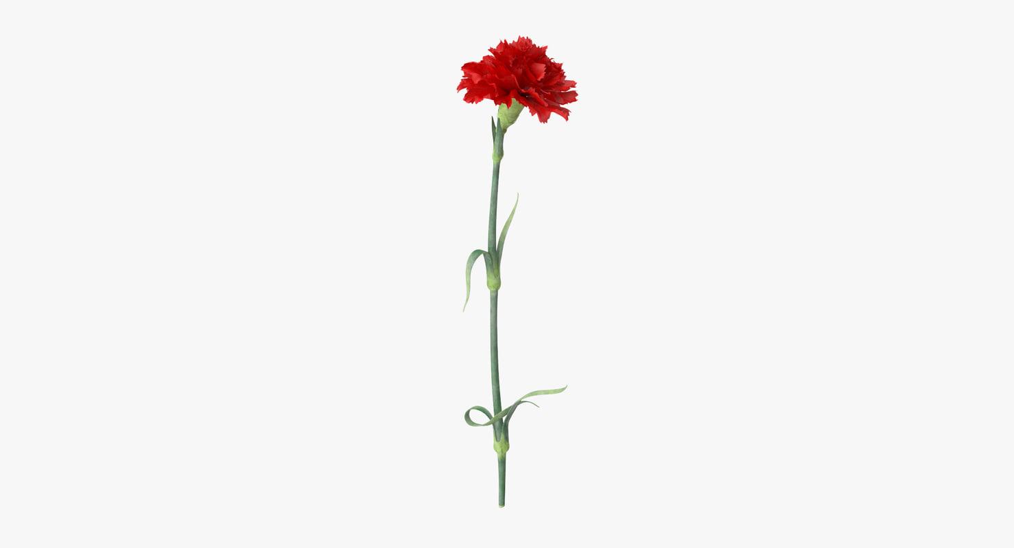 3d single standing carnation - model