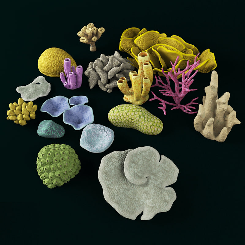 coral polyps max