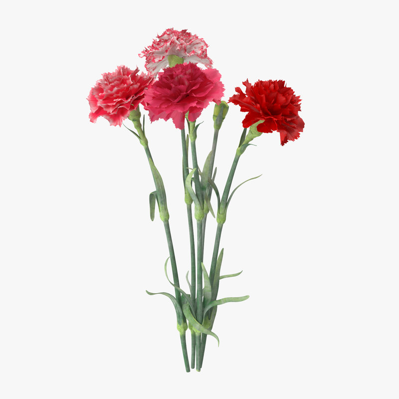 carnation lily hydrangeas peony max