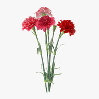 Carnation - Bouquet