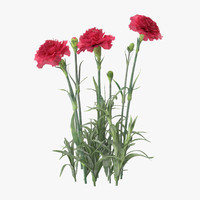 carnation natural group - 3d max