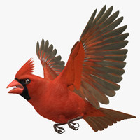 cardinalis northern cardinal male rigged 3d obj