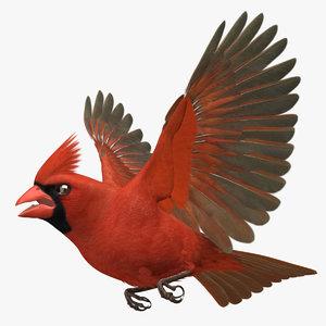3d model cardinalis northern cardinal male rigged