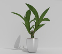 indoor pot plant 3d model
