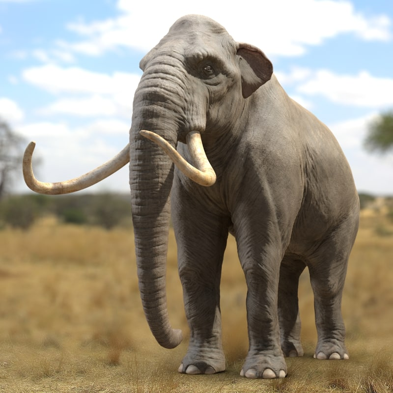 mammoth tusks 3d obj