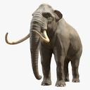 Mammoth 3D models